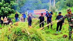 Dua Hektar Ladang Ganja Dibakar TNI, Polri dan BNN